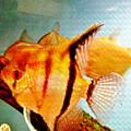 Fish Tank by Don Baker