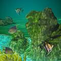 Fish Tank by Margit Gentile