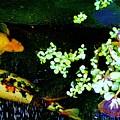 Fish Water Flowers 3 by Phyllis Spoor