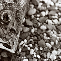Fishbone 2 by Linnea Tober