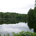 Fisherville Brook 1 by Erin Rosenblum
