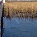 Fishin' Lines by Kay Lovingood