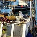 Fishing Boat Captain Seagull - Rovinj, Croatia by Global Light Photography - Nicole Leffer