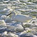 Fishing In The Foam by Diana Hatcher