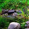 Fishing Pond by Kimberly Woyak