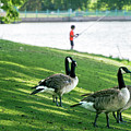Fishing With The Geese by Cary Leppert