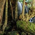 Fitzroy Falls 01 by Werner Padarin