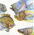 Five Fading Fish by Cee Grant