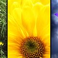 Five Flower Composite by Donald  Erickson