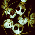 Five Halloween Dolls With Button Eyes by Jorgo Photography - Wall Art Gallery
