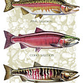 Five Salmon Species  by JQ Licensing
