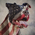 Flag Dog by Andy's Paw Prints