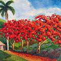 Flamboyans by Jose Manuel Abraham