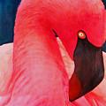 Flamboyant Flamingo by Dee Durbin