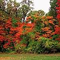 Flamboyant Forest by Michiale Schneider