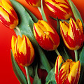 Flame Tulips by Garry Gay