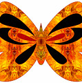 Flames Of Imagination And Abstract Butterflies By Omashte by Omaste Witkowski