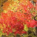 Flaming Leaves 3 Autumn Leaf Colors Art by Reid Callaway