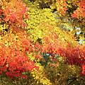Flaming Autumn Leaves Art by Reid Callaway