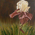 Flaming Bearded Iris by Barbara Harper