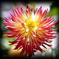 Flaming Beauty by AJ Schibig