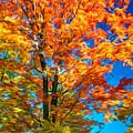 Flaming Maple - Paint by Steve Harrington