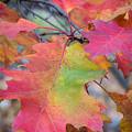 Flaming Oak by Diane Moore
