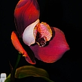 Flaming Orchid by Jeffery L Bowers