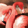 Flamingo 2 by Andrea Anderegg