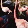 Flamingo 3 by Andrea Anderegg
