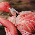 Flamingo 6 by Andrea Anderegg