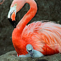 Flamingo And Baby by Anthony Jones