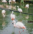 Flamingo Bath  by Anna Friedrichs
