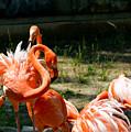 Flamingo Colony by Jennifer Wick