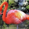 Flamingo by D Hackett
