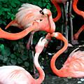 Flamingo Dance by Leo Malboeuf