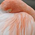 Flamingo by Dot Lestar Roberts