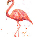 Flamingo Facing Left by Alison Fennell