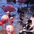 Flamingo Family  by Jennifer Craft