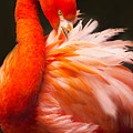 Flamingo Fluff by Joan McCool