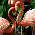 Flamingo Heart by Barbara Bowen
