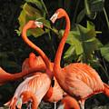 Flamingo Heart by Keith Lovejoy