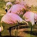 Flamingo - Id 16217-202804-4625 by S Lurk
