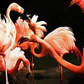 Flamingo Kisses by Alice Gipson