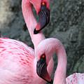 Flamingo Love Birds by Carol Groenen