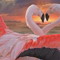 Flamingo Love by Damiano Navanzati