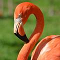 Flamingo by Maria Urso