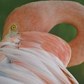 Flamingo by Melanie Beasley