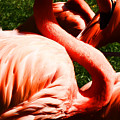 Flamingo by Milton Brugada