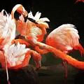 Flamingo Mingles by Alice Gipson